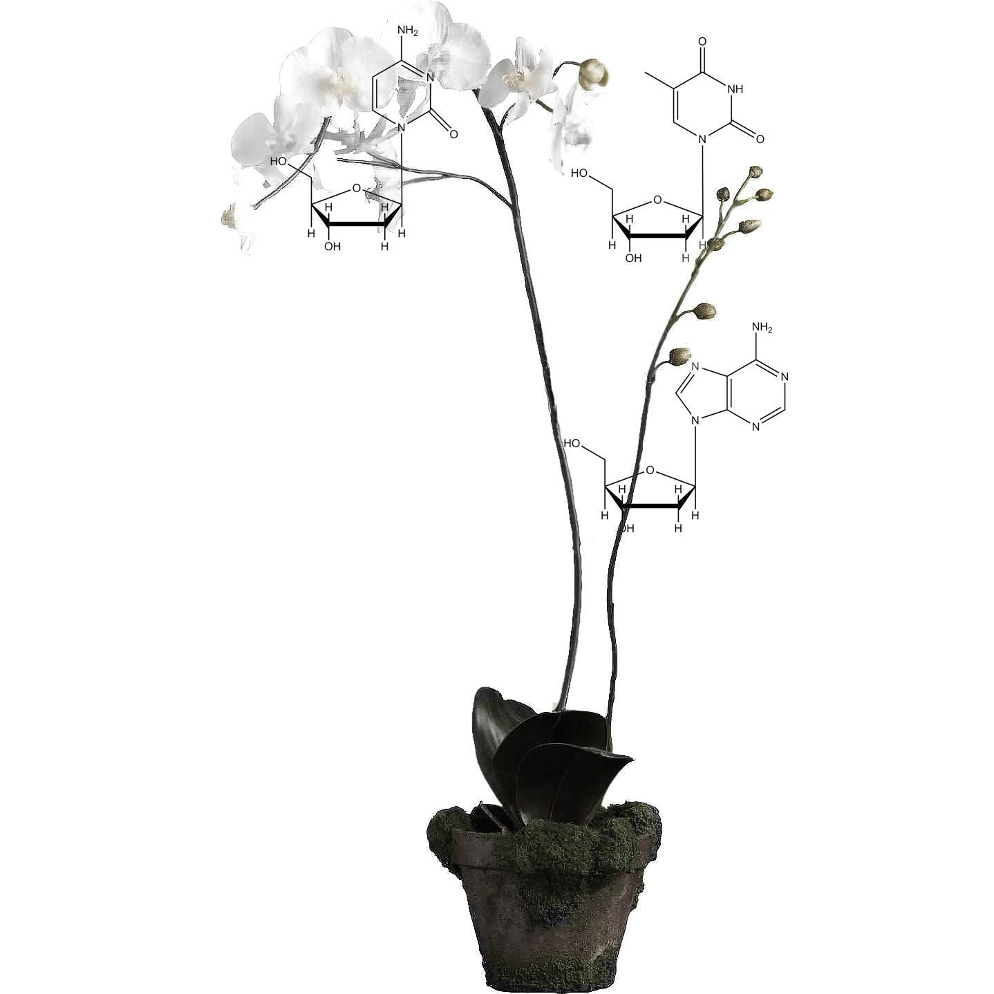 xenoflower